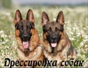 Профессиональная дрессировка собак любых пород с выездом к владельцу